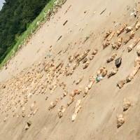 Rotten pig legs, animal organs strewn across Chinese beach