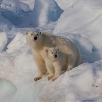 北極圈再創高溫紀錄 挪威斯瓦巴群島測得21.7度約平常4倍