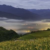 Daylily season begins in Taiwan's Hualien County