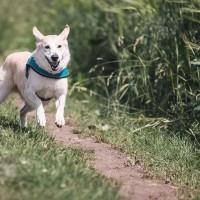 連動物都不安全!日本出現首例寵物犬感染武漢肺炎個案
