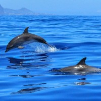 Boat owners face charges for harassing dolphins off Taiwan's East coast