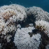 台灣墾丁珊瑚白化今夏最嚴重 潛水公司不歡迎擦防曬乳、化妝品遊客