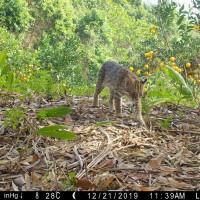 台灣野生動物監測新紀元 林務局全台監測網成形