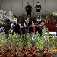 Police busts marijuana growing operation in central Taiwan
