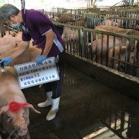 Taiwan health ministry denies telling hospitals to defend import of U.S. pork