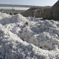 人權議題施壓中國 美國川普擬禁新疆棉料進口