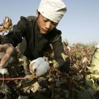 US bans cotton imports from China producer XPCC citing Xinjiang 'slave labor'