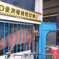 Taiwan launches automatic 3D system to measure pigs