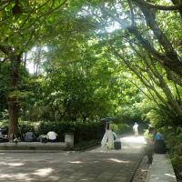 林試所:都市林有助改善熱島效應 台灣都會區應增加整體綠覆率