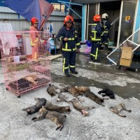 11 cats injured, 3 killed, in central Taiwan fire
