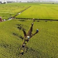 農糧署鼓勵友善環境耕作 台灣有機農業耕作面積逾15,000公頃