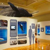 鯨骨解密!台灣首次展出朗氏喙鯨全身骨骼 臺博館「鯨驗值特展」揭海洋神秘面紗