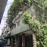 Trees and houses intertwine in Taiwan's Changhua