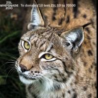 新冠肺炎疫情衝擊動物園 野生動物保育大危機