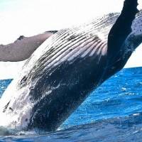 多元培養海洋思維 2021台灣海洋青年論壇徵件中