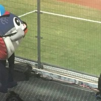 Photo of the Day: Severed fish head mascot spotted at Taiwan baseball game
