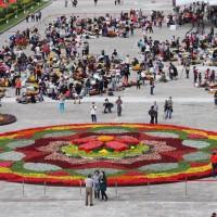 台灣花卉之美 大型花毯現台北民主大道