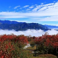 Check out Taiwan's maple leaf scenery