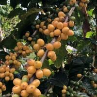 為台灣咖啡產業發展紮根 農委會首次跨域整合