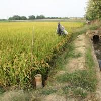 Taiwan to suspend irrigation on Jianan Plain amid dry season