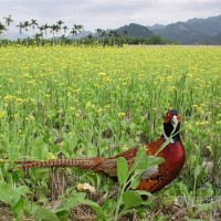 Taiwan releases first national bird report