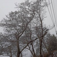 Rare frost forces school closures in mountainous area of Taiwan
