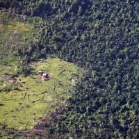 氣候變遷樹林變矮?森林碳儲存功能弱化英國科學家憂