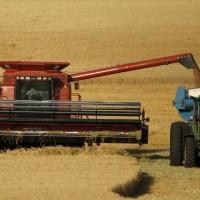 China spends big on Australian wheat despite trade war