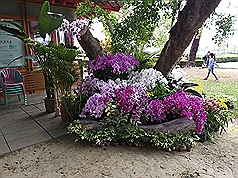 Taiwan's floriculture industry hit by coronavirus
