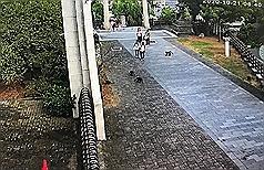 Taiwan monkeys create chaos on school campus