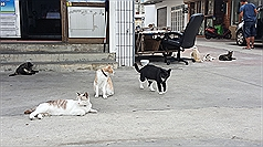 Taiwan's Penghu looks to strays in bid to drive 'cat tourism'
