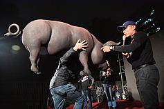 〈時評〉美國萊豬難擋 應以科學方法嚴格管理