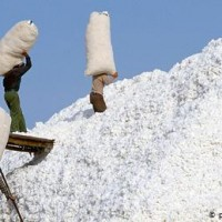 US bans imports of Xinjiang cotton and tomato products