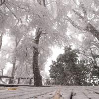 最新【台灣寒流來襲】太平山降下2021第一場雪 山毛櫸步道宛如北國世界