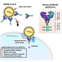 Taiwanese scientists develop decoy antibody to fight COVID-19