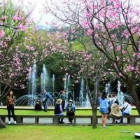 Taipei's Yangmingshan Flower Festival to kick off Friday