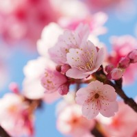8 Taiwanese taboos to avoid on Lichun, 1st day of spring