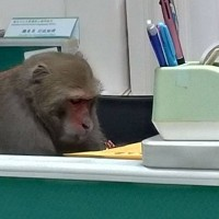 Photo of the Day: Monkey working overtime in southern Taiwan