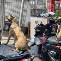 Photo of the Day: Dog co-pilot spotted in central Taiwan