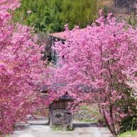 【走春】把握最後一天假期 新竹縣推三大山區夢幻美景 彷若置身世外桃源