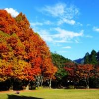 奧萬大楓香林全台灣最廣 邀民眾感受森林療癒效果