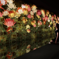 日本teamLab最新桑拿藝術展覽搶先看 免寬衣解帶揭秘「淋汗茶會」文化