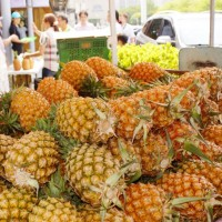 Local orders flood in amid pineapple purchase drive