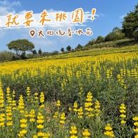 【更新】台灣228連假遇櫻花季•桃園拉拉山人潮一度轉「黃燈」 魯冰花的故鄉: 大北坑也在向您招手唷~~