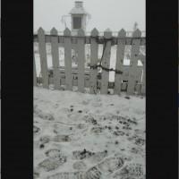 台灣玉山今晨7時降雪一小時•積雪3公分 南投信義鄉「草坪頭櫻花季」延長交管至3月14日