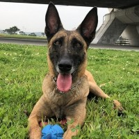 Retired rescue dog looking for new home in Taiwan
