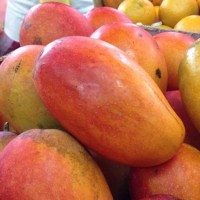 China may challenge Taiwan mango exports to Japan