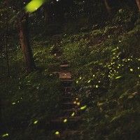 View fireflies on Taipei's Tiger Mountain