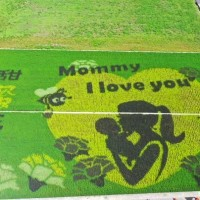 Photo of the Day: Mother's Day 'painting' seen in Taiwan rice field
