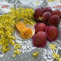 外銷日本重要農產品 今夏臺灣芒果糖度比往年高